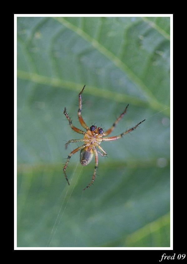 face ventrale d'une araignée sur sa toile