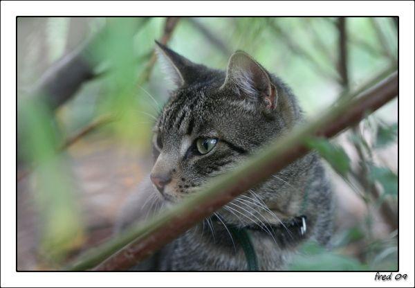 Carbone en balade dans les buissons