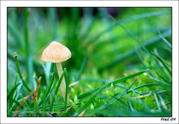 entre les brins d'herbe ..........2