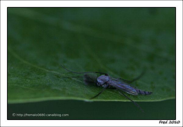 mister moustique