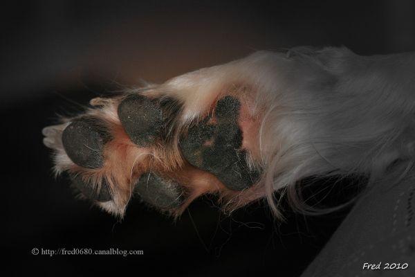 pied de lièvre .....