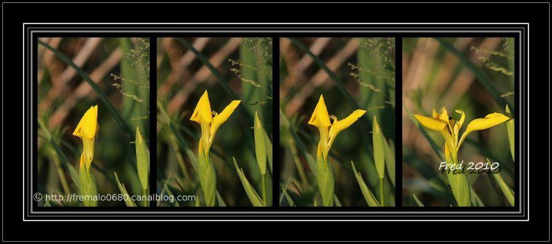 Blooming ................