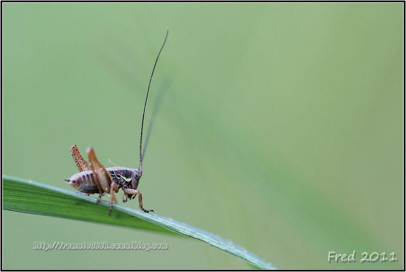 grandes antennes ....