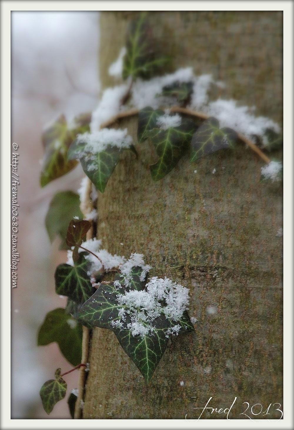 Wintery sweetness