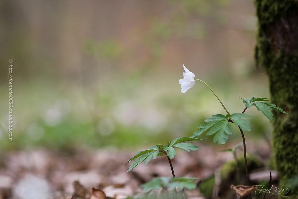 Adieu au printemps