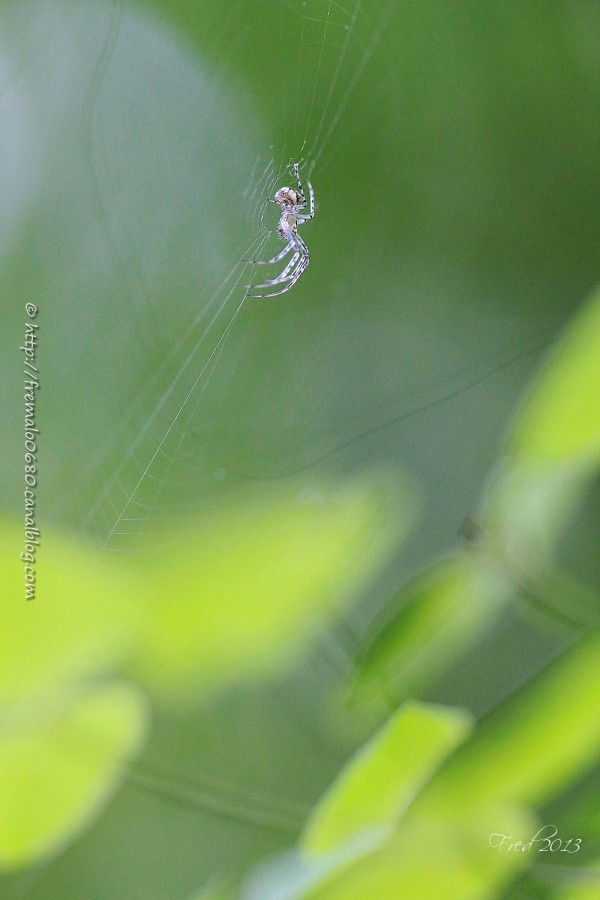 araignée spider arachnide