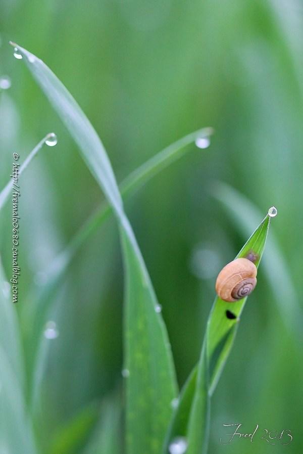 Escargot, gastéropodes, snail,