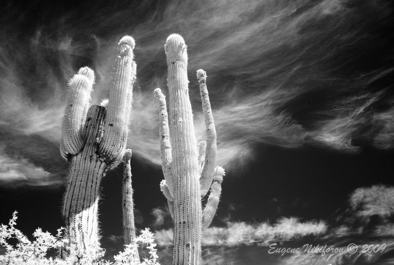 Calchaquíes Valley, Salta, Argentina (infrared)