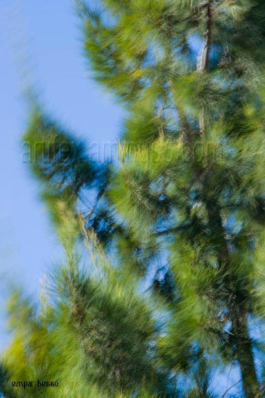 arbre ballant