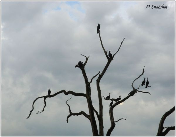 Birds perched on bare branches
