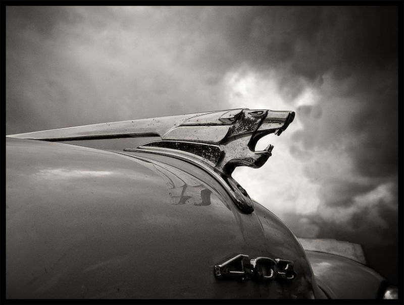 Lion by Peugeot - BW Version