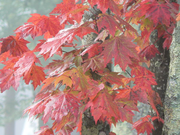 Fall Leaves in Pipestem, WV