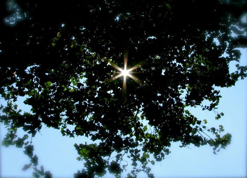 Trees, sky = star!