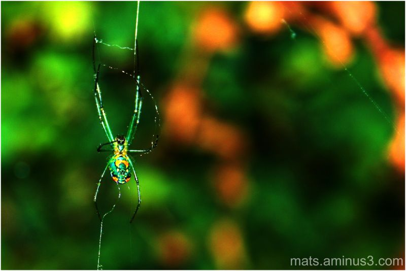 spider,web