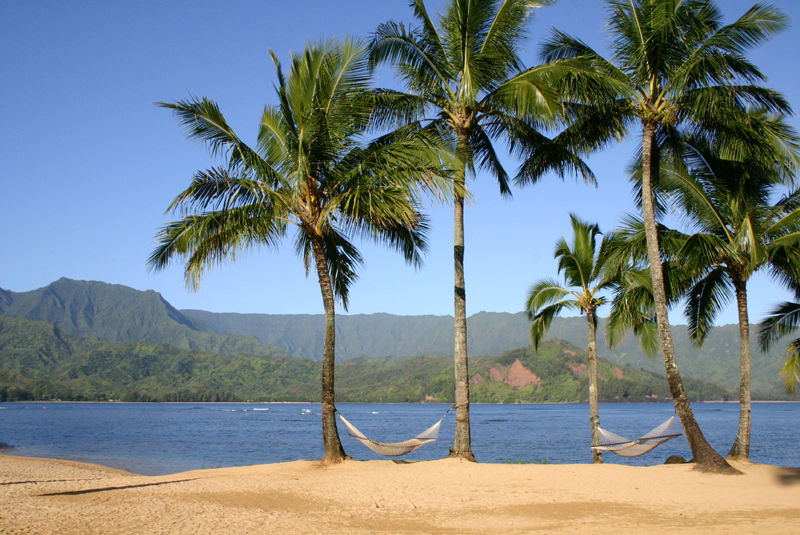 hammocks and palm trees on the beach in kauai