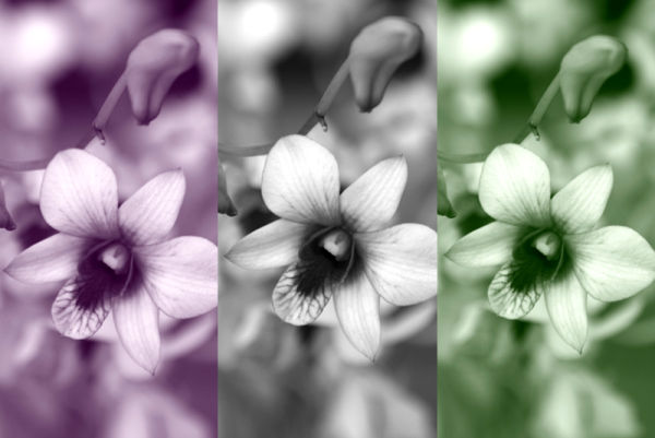 different filtered versions of black/white orchid