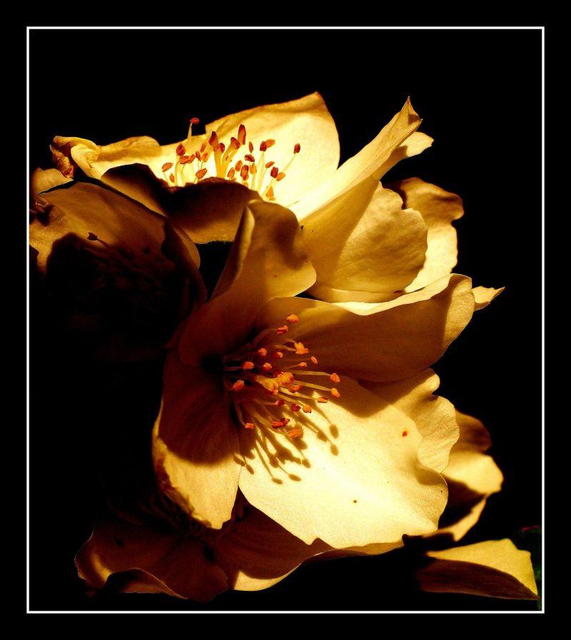 Fleur dans la lumière