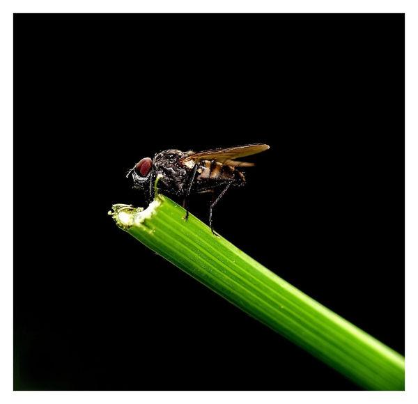 mouche dans le noir