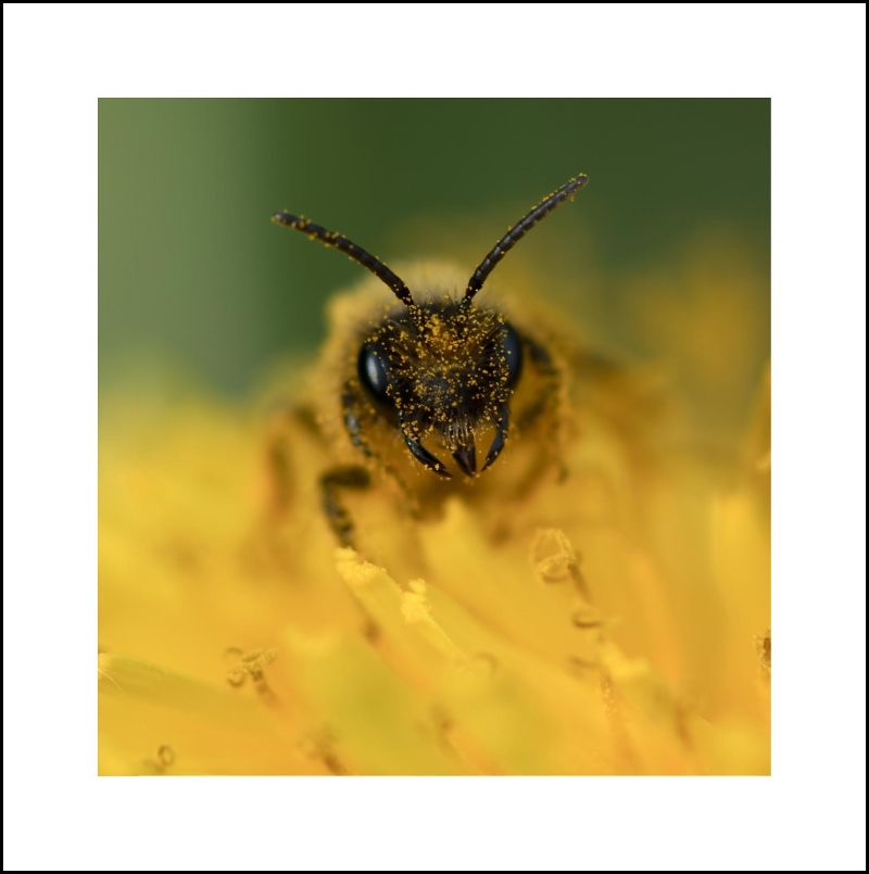 shoot au pollen