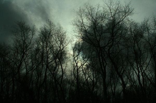 une forêt qui fait peur