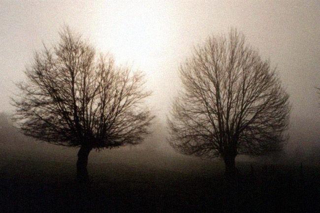 arbre,brume
