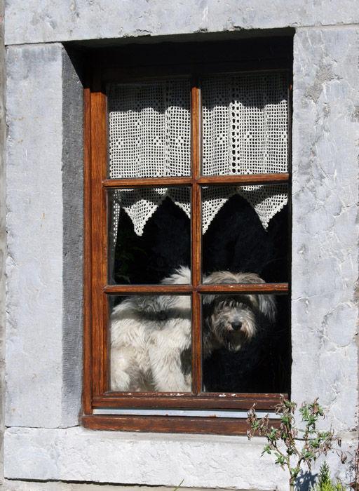 Le petit chien dans la vitrine