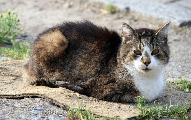 Felix, el gato