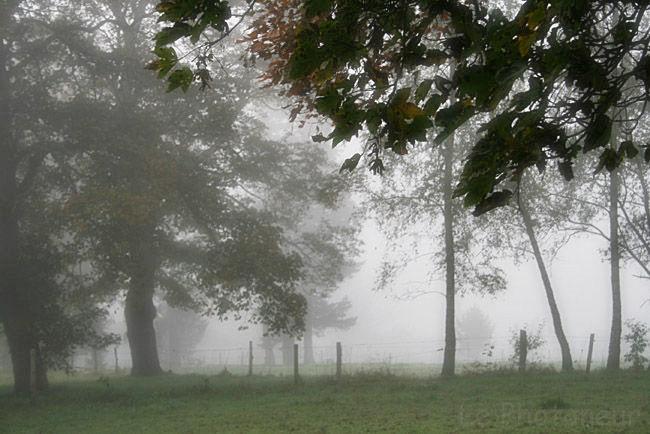 parc de Tribomont, Pepinster Belgique