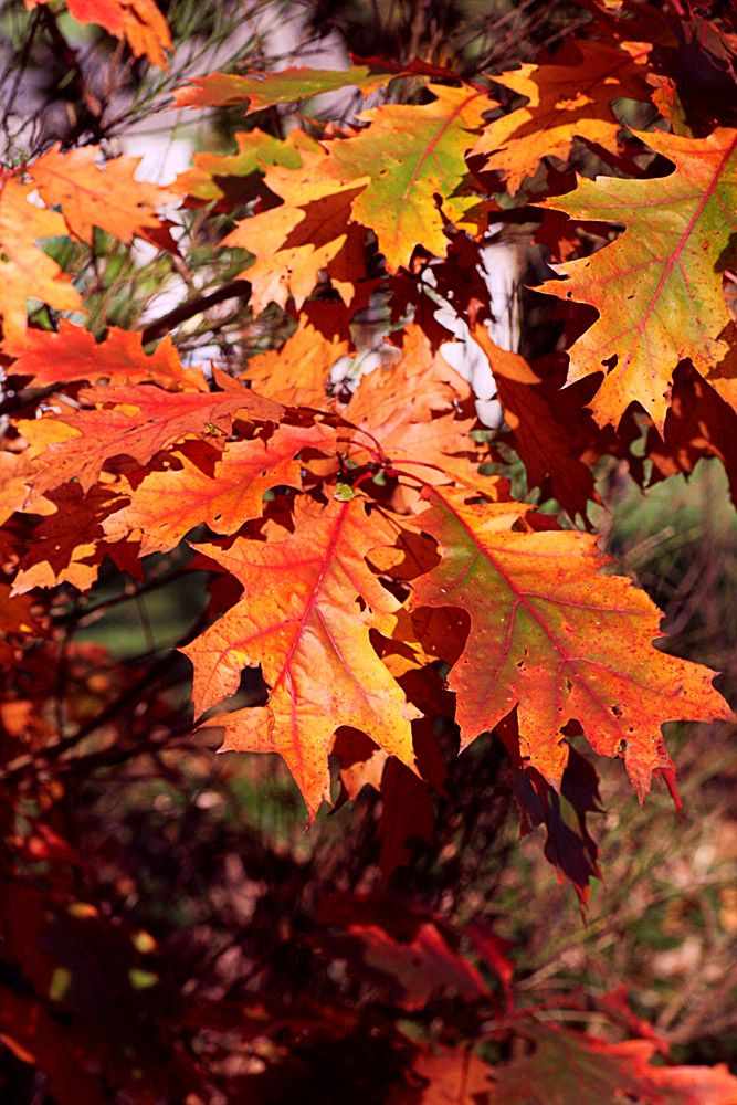 feuille d'automne