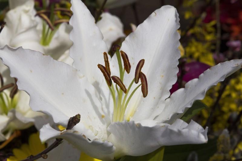 Quizz floral  - Floral Quiz