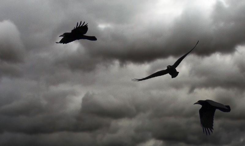 corbeaux sur un ciel gris