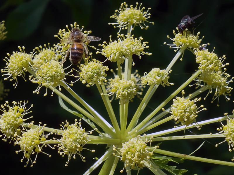 une mouche sur une plante
