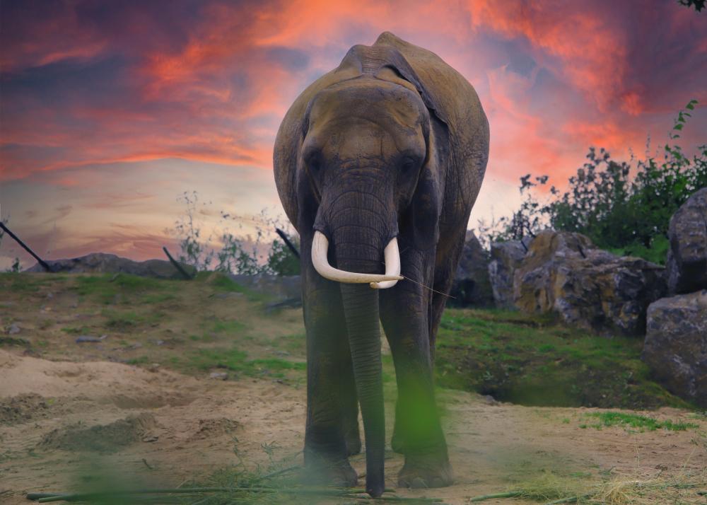 Jumbo l'éléphant