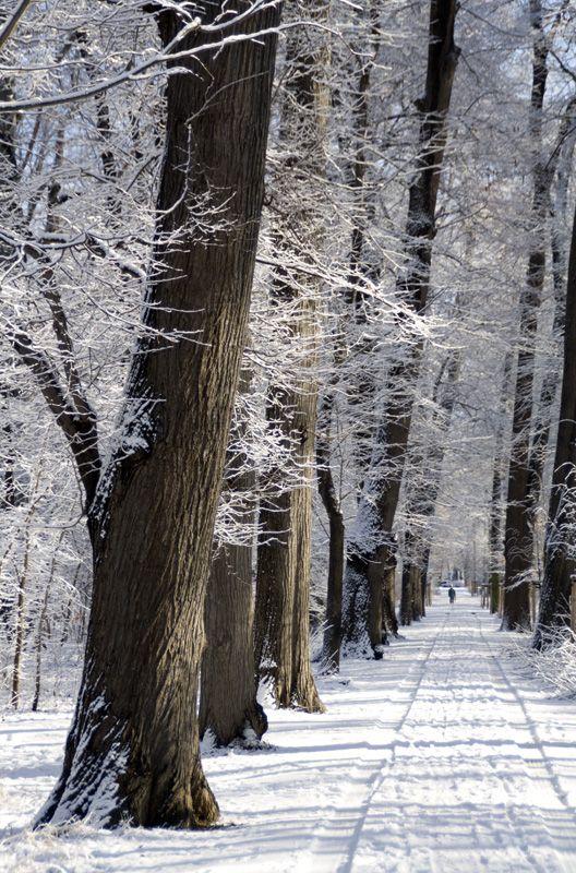 snow, winter, germany, park