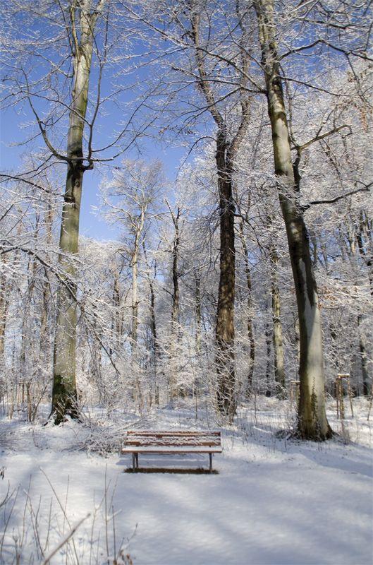 snow, winter, germany, park, bench