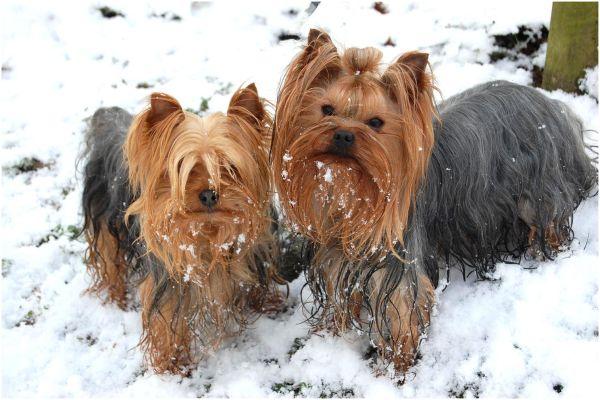 Deux poilus dans la neige