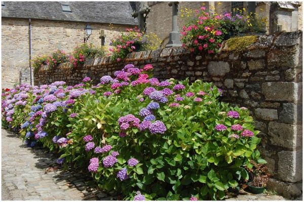 Mur fleuri de l'église abbatiale de Daoulas