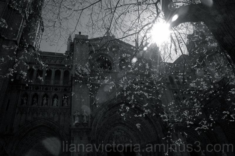 afternoon sun over a church