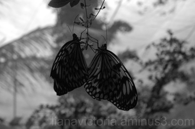 butterflies from an insect farm