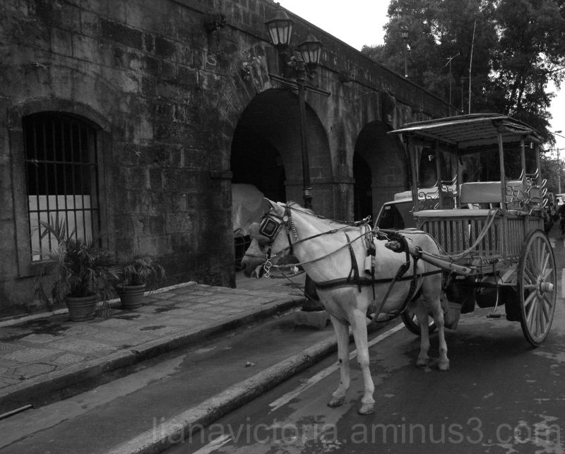 horse buggy in old town manila