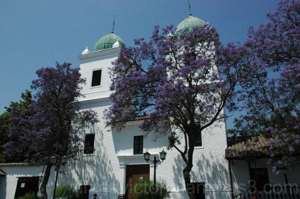 purple trees outside a church