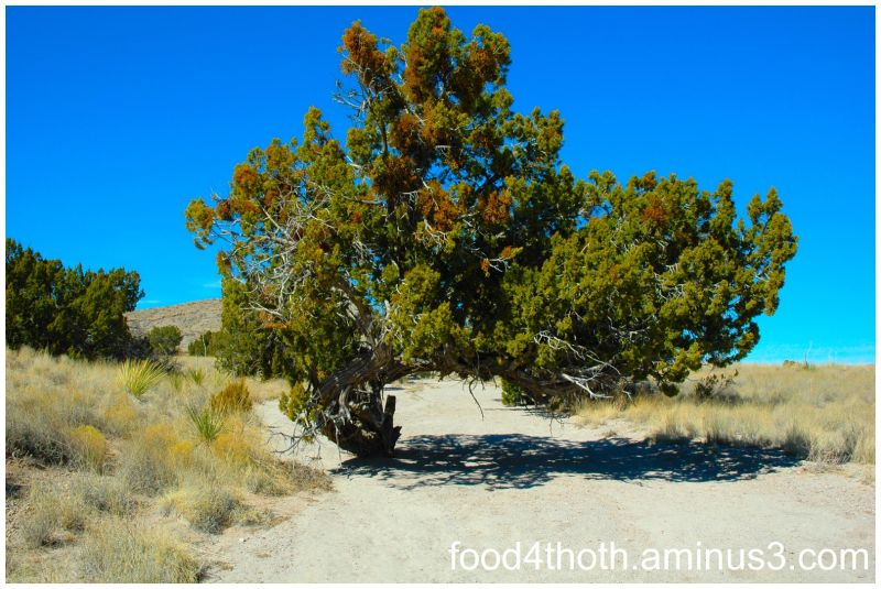 Tree in Wash