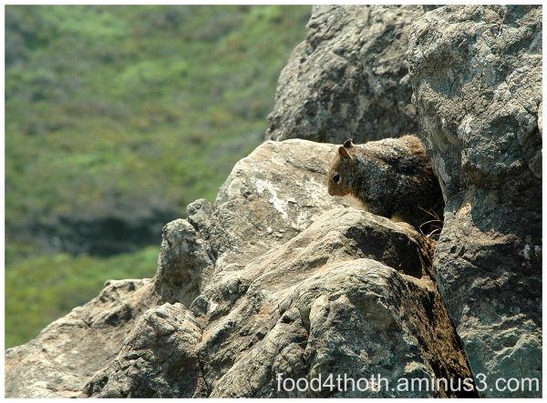 Rocky Squirrel