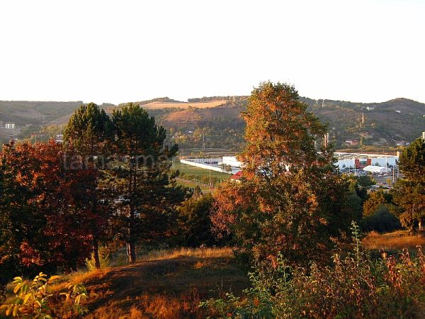 Autumn colors, rusty autumn leaves.