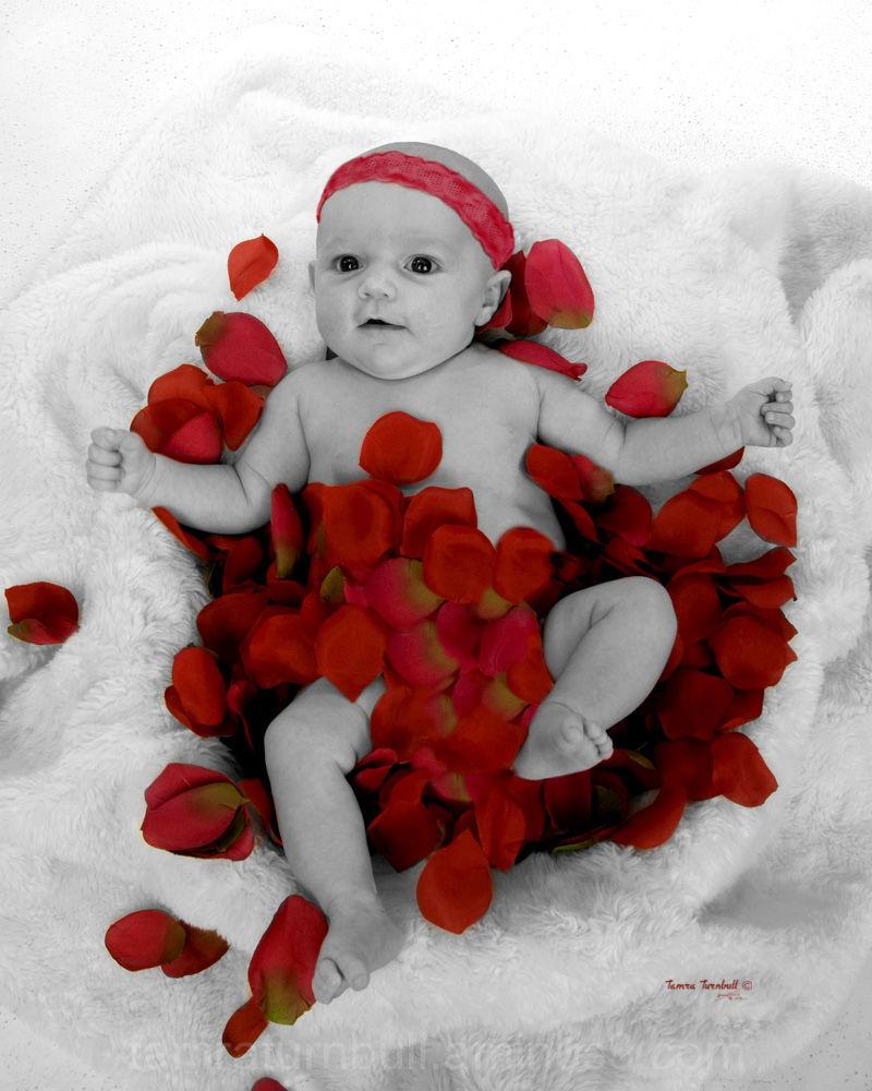 Baby in Roses