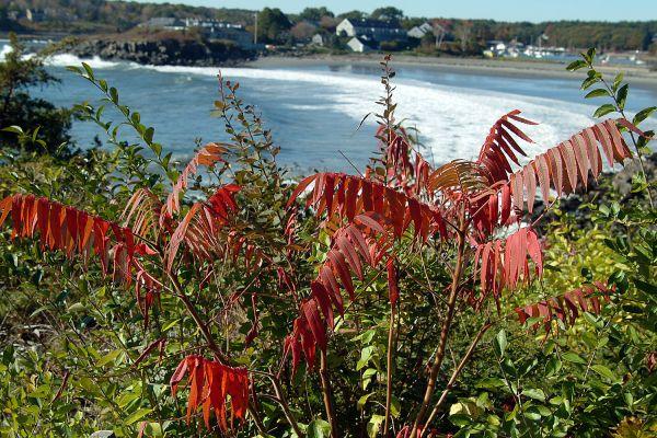 Atlantic Ocean - Maine