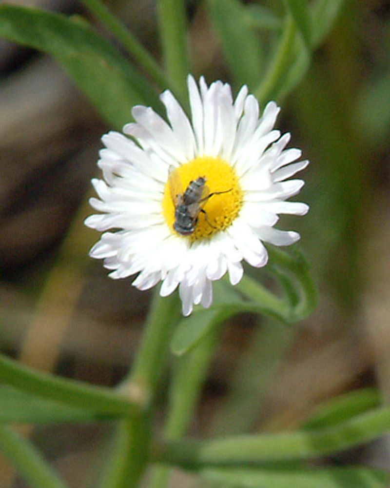 Flower in the sandhills of Nebraska
