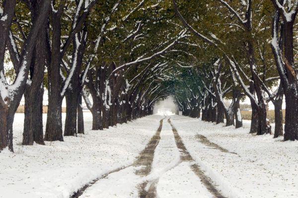 Snowy Tree Lane