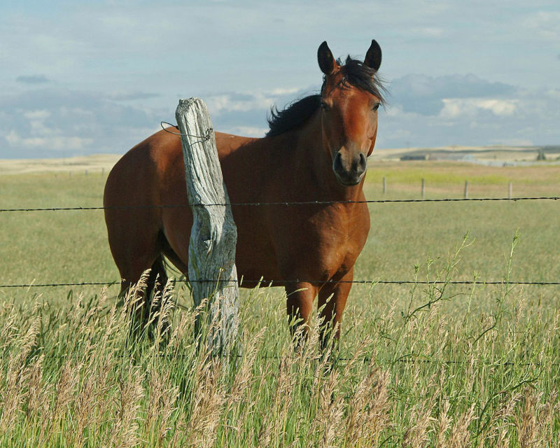 Horse in Sowbelly Canyon