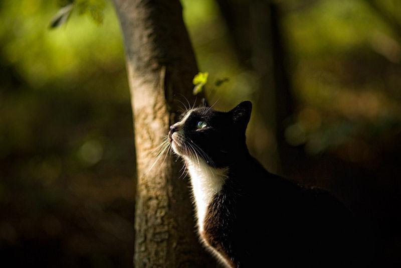 kitty in light
